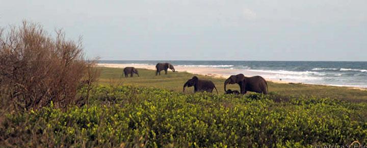 Safari suggestions Gabon, choice 3